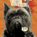 Psie wiersze Kerna
