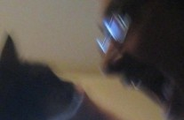 Koty w Mleczarni
